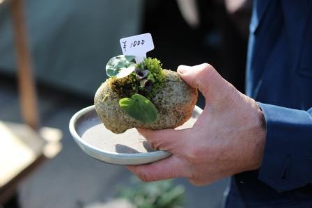お店のおじさんおススメの自然石みたいな盆栽鉢 -覚王山 日泰寺参道の縁日-