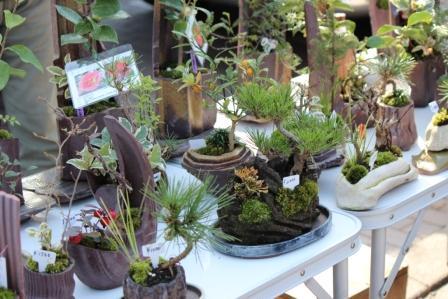 かわいい苔玉盆栽鉢の並ぶお店 -覚王山 日泰寺参道の縁日-