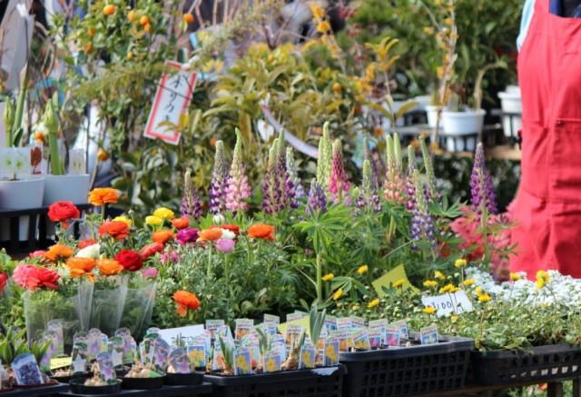 植木屋さんの花たちは見ているだけでも楽しい -覚王山 日泰寺参道の縁日-