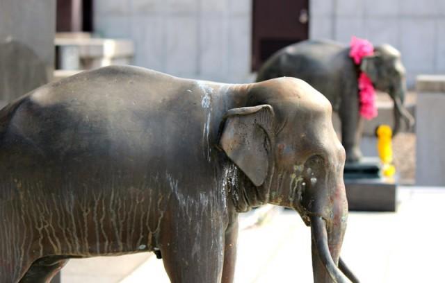 タイ国王にお伴する2頭の象
